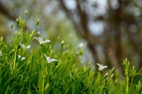 5 redenen waarom buiten zijn goed voor je is
